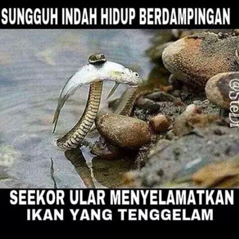 Image result for ular menyelamatkan ikan